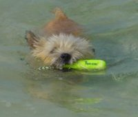 Trapper swimming in the Bahamas