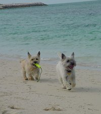 Trapper & Murphy on the beach