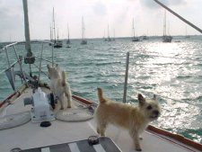 Trapper & Murphy on the boat